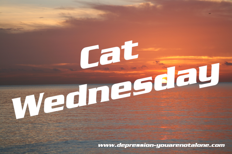 the words cat wednesday over ocean sunrise (copyrighted)