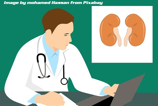 doctor at computer with image of kidneys in upper right corner