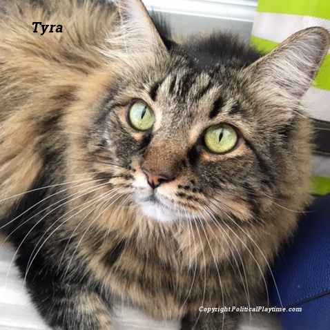 a cat named tyra